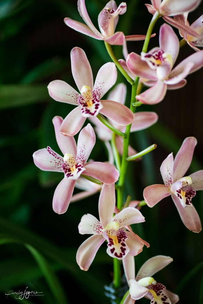 purelyjoyous photography.rf orchids fall 2017.a-1-5